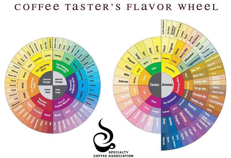 咖啡風味輪